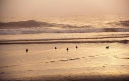 Uccello e mare al tramonto Fotografia Stock