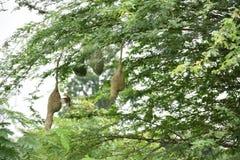 Uccello e nido Fotografie Stock