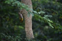 Uccello e nido Immagini Stock
