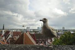 Uccello e nuvole Fotografia Stock