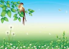 Uccello e prato floreale Immagine Stock Libera da Diritti