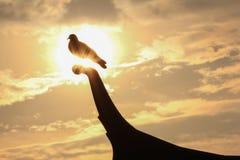 Uccello e Sun Fotografie Stock