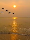 Uccello e tramonto Fotografia Stock