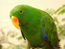 Uccello esotico Fotografia Stock Libera da Diritti