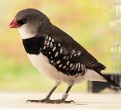 Uccello esotico Immagine Stock