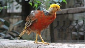 Uccello esotico all'uccelliera di regno dell'uccello, cascate del Niagara, Canada Fotografie Stock Libere da Diritti
