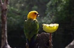Uccello esotico del pappagallo immagine stock