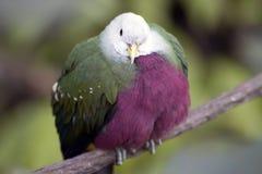 Uccello esotico I Immagini Stock
