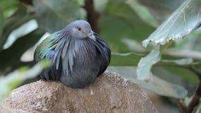 Uccello esotico, uccelliera di regno dell'uccello, cascate del Niagara, Canada Fotografia Stock