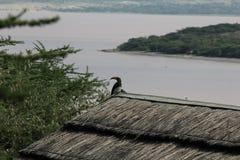 Uccello in Etiopia Fotografie Stock Libere da Diritti