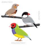 Uccello Finch Set Cartoon Vector Illustration Fotografie Stock Libere da Diritti