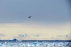 Uccello freddo Fotografie Stock