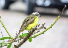 Uccello a fuoco Fotografia Stock Libera da Diritti