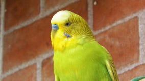 Uccello giallo Fotografie Stock