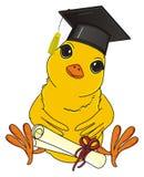 Uccello giallo pronto a studiare Immagine Stock Libera da Diritti