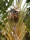Uccello gigante della pianta di paradiso Immagini Stock Libere da Diritti