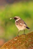 Uccello grazioso sulla natura Immagine Stock