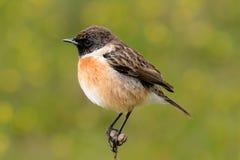 Uccello grazioso sulla natura Fotografia Stock Libera da Diritti