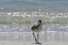 Uccello guadante, Florida Immagine Stock Libera da Diritti