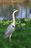 Uccello in Hyde Park immagine stock