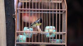 Uccello ingabbiato che si agita intorno nella gabbia di legno da vendere sulla via video d archivio