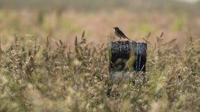 Uccello isolato Fotografia Stock