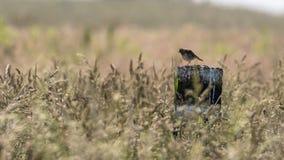 Uccello isolato Immagine Stock Libera da Diritti