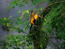 Uccello libero Immagini Stock
