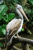 Uccello lungo della bocca Fotografia Stock