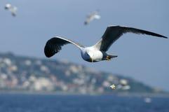 Uccello marino Fotografia Stock