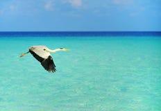 Uccello marino Fotografie Stock