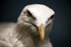 Uccello marino Fotografia Stock Libera da Diritti