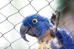 Uccello messo in gabbia Immagini Stock