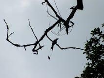 Uccello munito gemello sulla cima dell'albero Immagini Stock Libere da Diritti