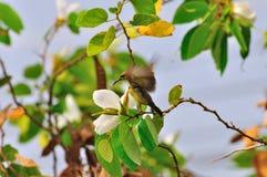 Uccello in natura Immagine Stock