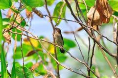 Uccello in natura Immagini Stock Libere da Diritti