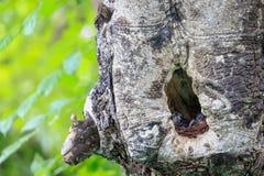 Uccello nei colori differenti Fotografie Stock Libere da Diritti