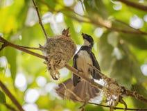 Uccello nei colori differenti Immagine Stock