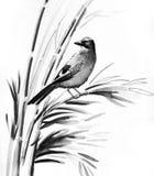 Uccello nel bambù Fotografia Stock Libera da Diritti