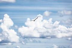 Uccello nel cielo Fotografia Stock