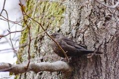 Uccello nell'albero Fotografia Stock