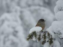 Uccello nell'inverno Fotografia Stock