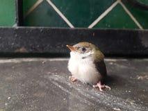 Uccello nella casa immagine stock