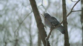 Uccello nella foresta di inverno video d archivio
