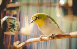 Uccello nella gabbia Immagini Stock