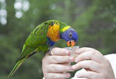 Uccello nella mano Fotografie Stock Libere da Diritti