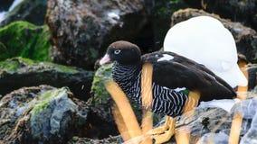Uccello nella roccia Fotografia Stock