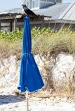 Uccello nero in cima all'ombrello Fotografia Stock Libera da Diritti