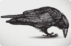 Uccello nero del corvo, a mano disegno. Illustratio di vettore Fotografie Stock
