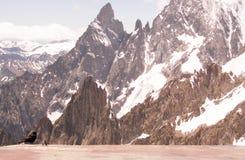 Uccello nero e montagne rocciose Fotografie Stock Libere da Diritti